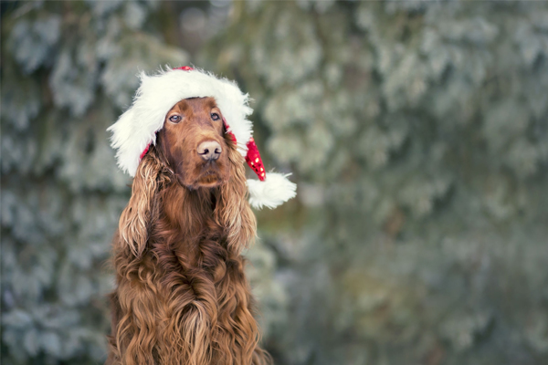 Article image for Laura V's list of 9 festive foods you should NOT feed your dog this Christmas
