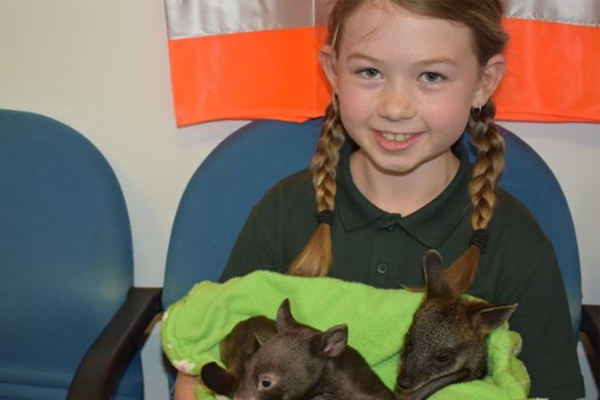 Article image for Little 8-year-old Logan fundraising to buy local wildlife rescue service a car