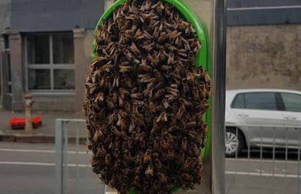 Article image for Trams skip Lygon St stop due to bee swarm