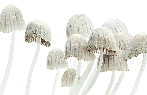 Magic Mushroom trial to begin at Melbourne hospital