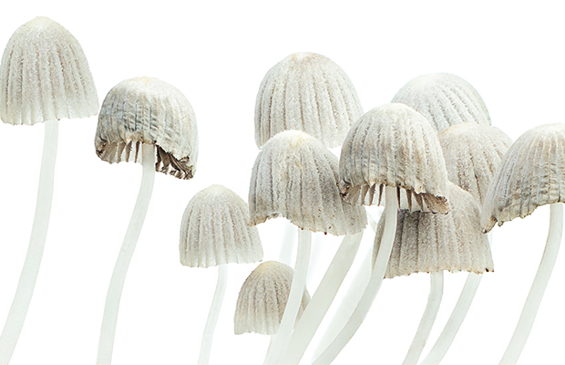 Article image for Magic Mushroom trial to begin at Melbourne hospital