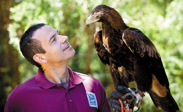 Article image for One of Healesville Sanctuary's star attractions takes off mid-show!