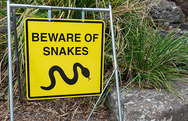 Article image for Experts say this is Melbourne's new snake capital