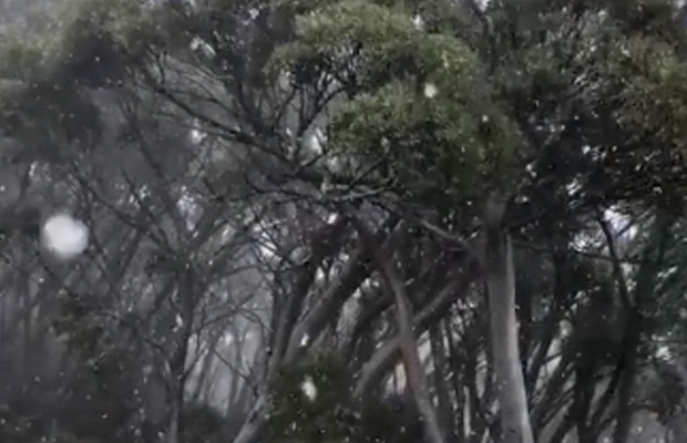 Article image for It's snowing at Mt Baw Baw … in February!