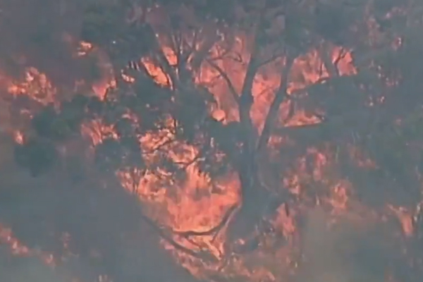 Article image for Mornington Peninsula fire now under control
