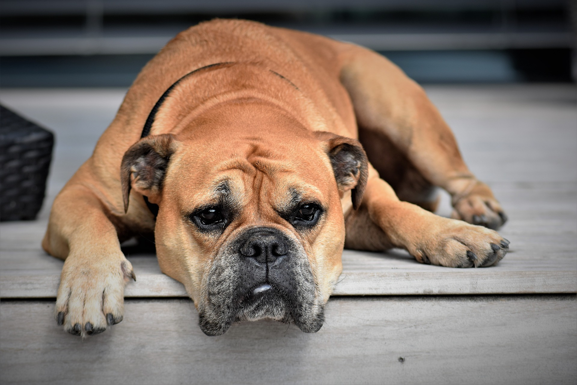 Article image for Calls for more control orders in animal cruelty cases
