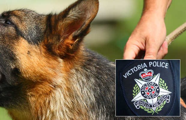 Article image for Constable taken to hospital after being bitten by a police dog