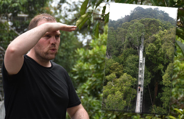 Article image for Melbourne eyes new treetop attraction (Scorcher will be happy)