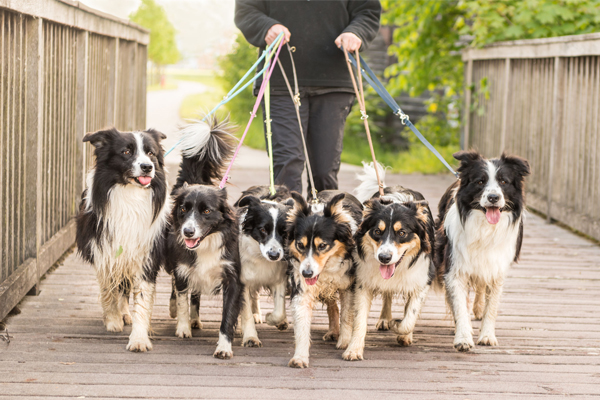 Article image for Rumour confirmed: Stonnington Council limits number of dogs that can be walked at once