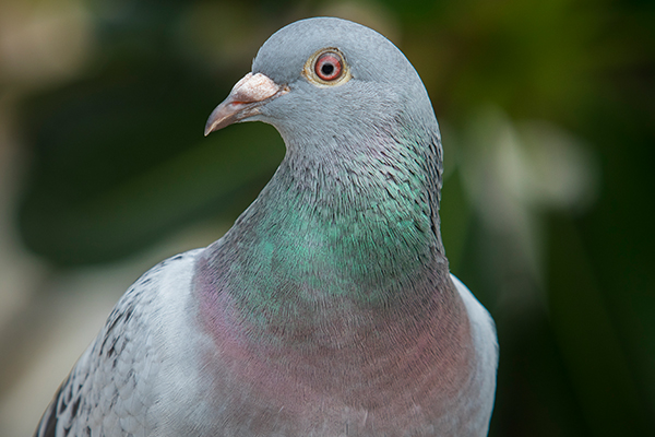Article image for You won't believe what a racing pigeon sold for…