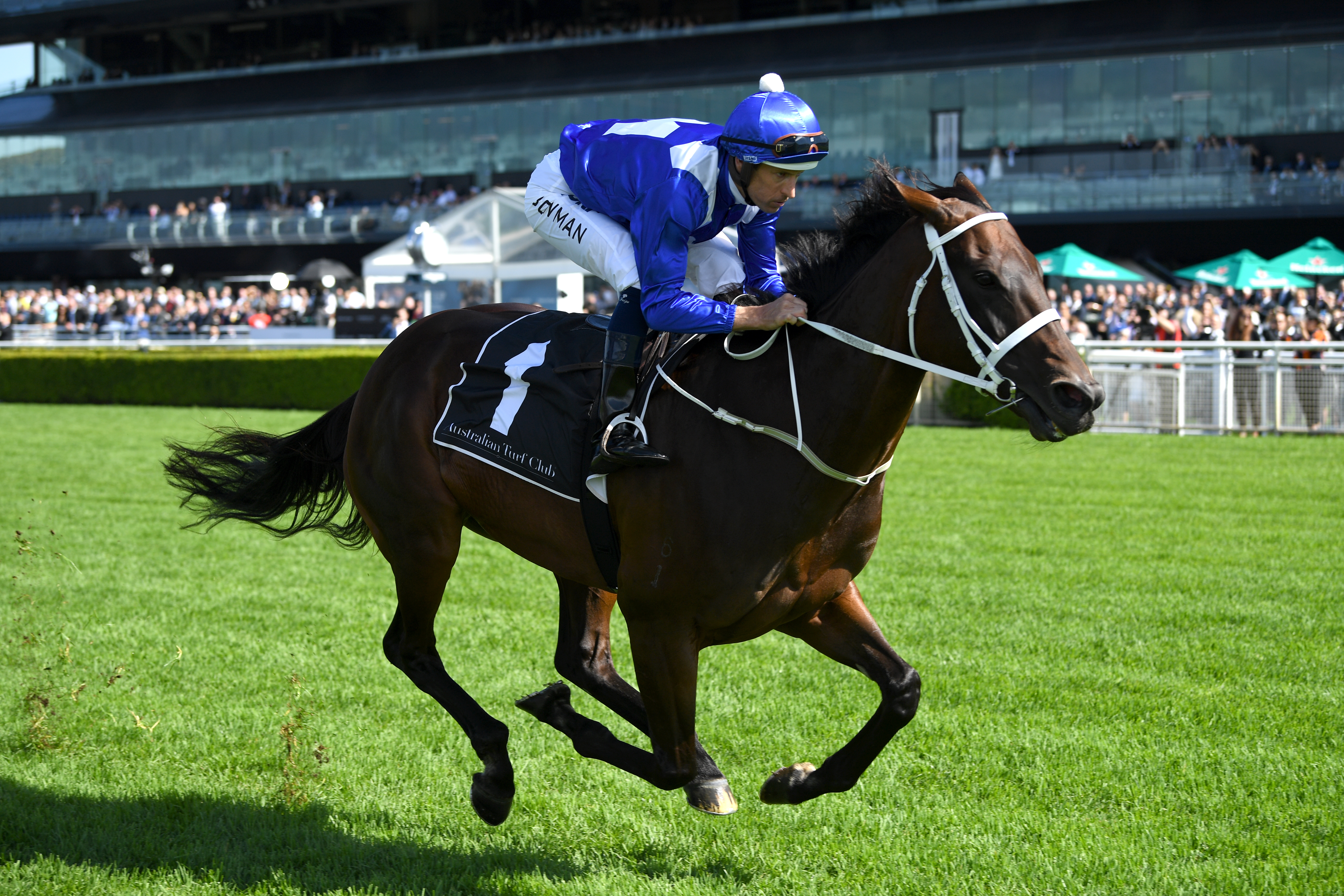"""Article image for Why """"100 per cent athlete"""" Winx is a once-in-a-generation race horse"""