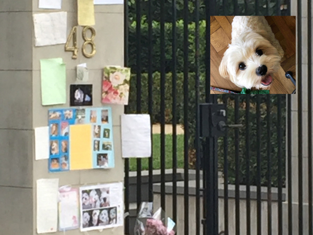 Article image for Touching tribute: Grieving family creates shrine for beloved pooch