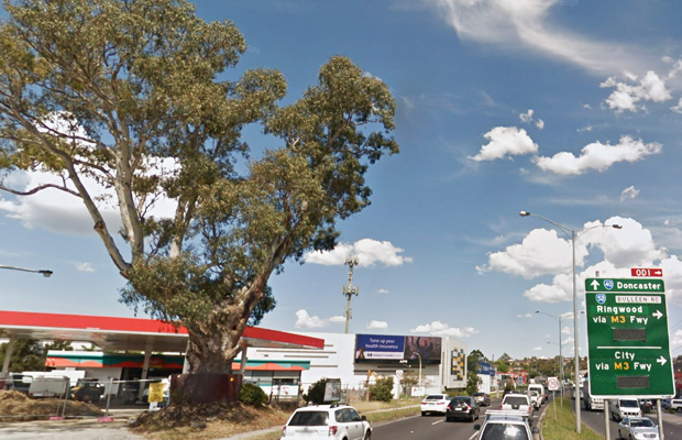 Article image for Death row red gum prompts anger, and a warning for all Melburnians