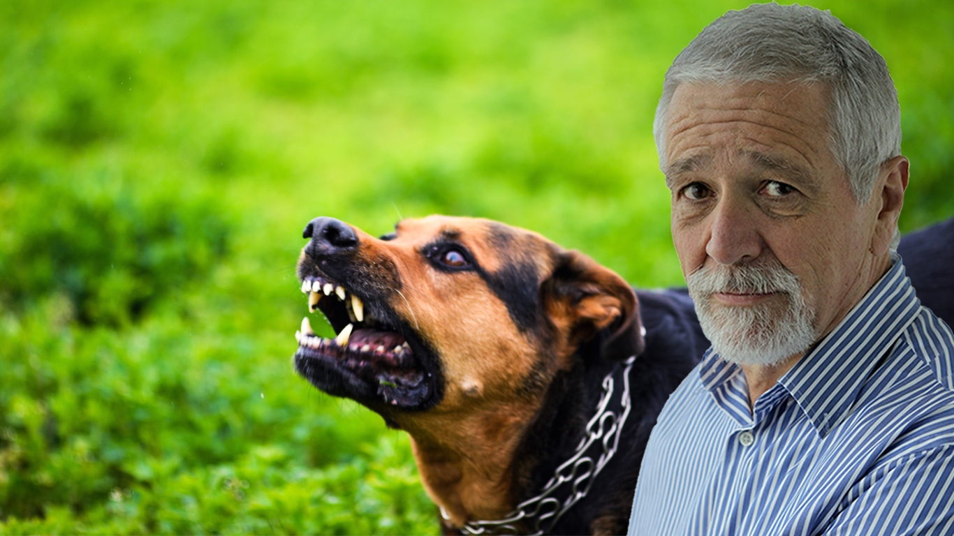 Article image for Neil Mitchell calls for tougher restrictions on dog owners after numerous attacks