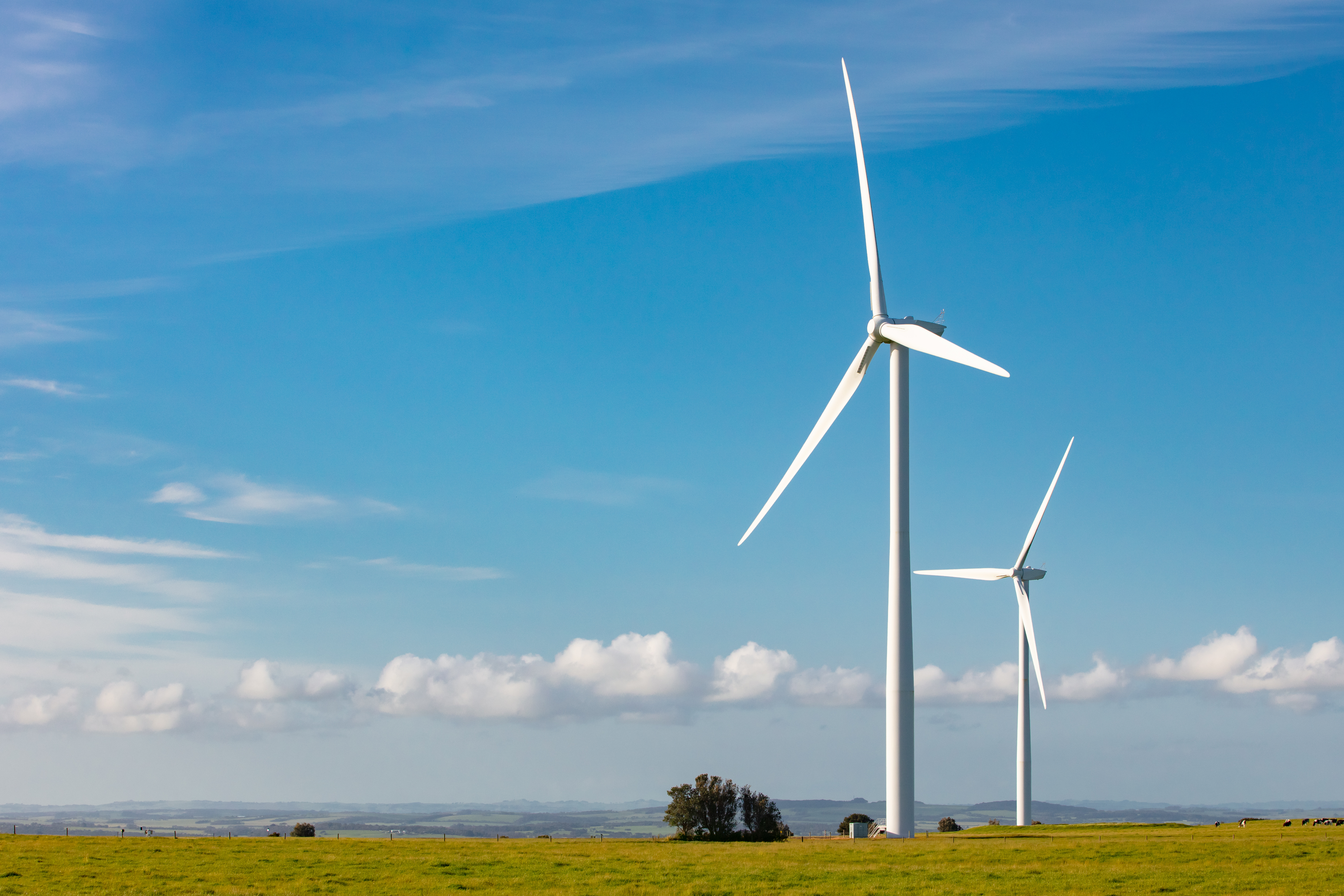 Article image for Victorian Greens stand by wind farms, but urge careful consideration amid bird concerns