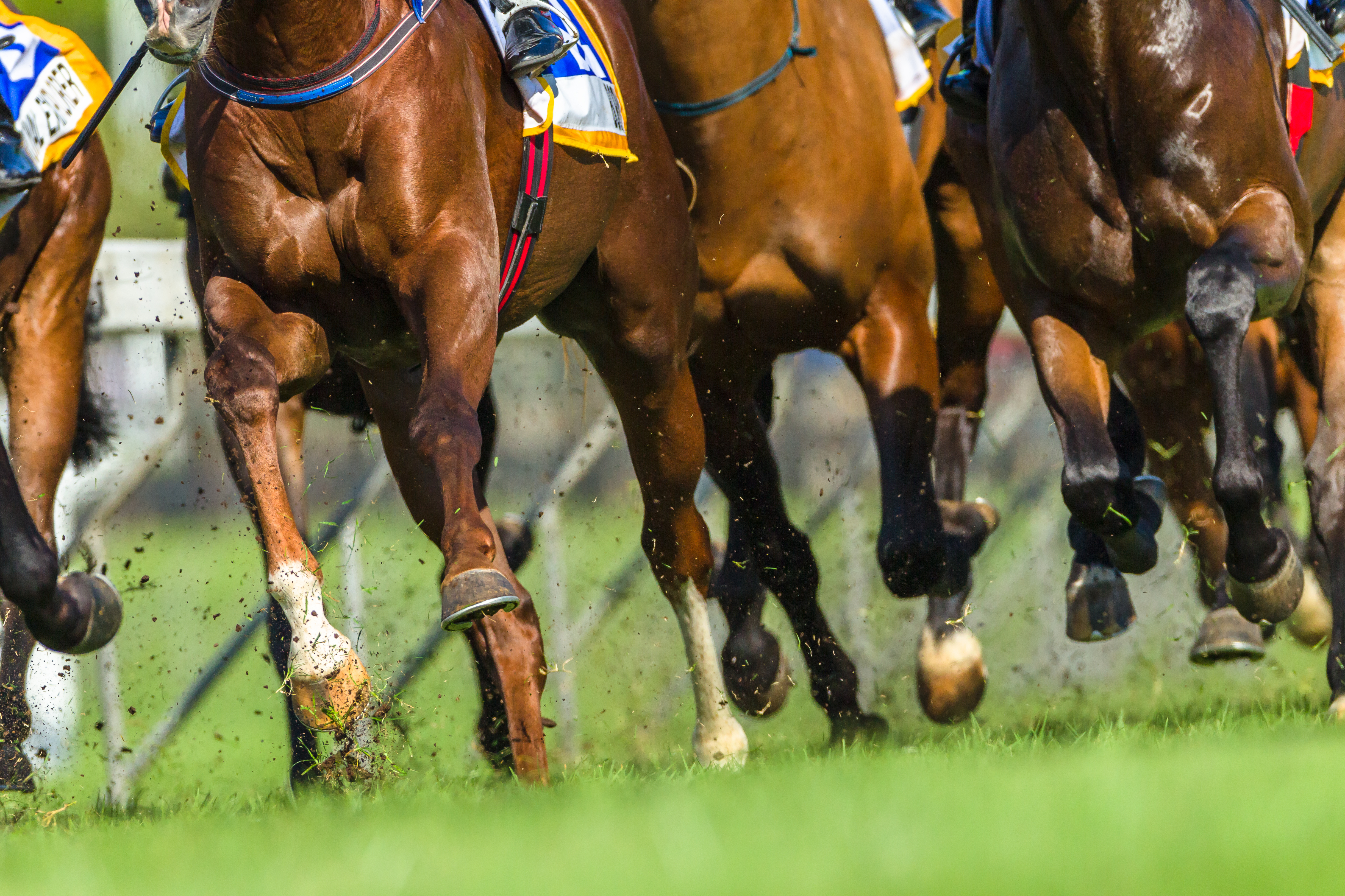 'We can't abandon them': Why racing is different to 'other sports' during coronavirus crisis