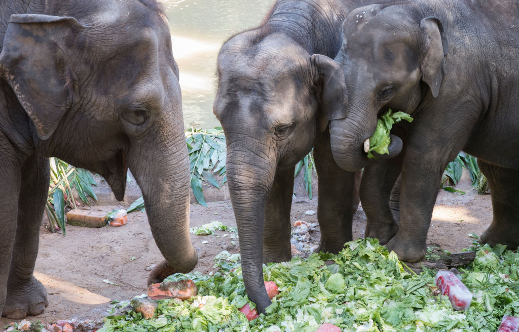 Article image for Melbourne Zoo is losing its much loved elephants