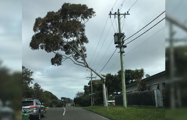 Tree trimmed to avoid powerlines now has 'dangerous' lean