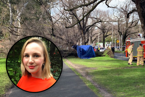 Article image for University professor killed by falling tree in tragic incident