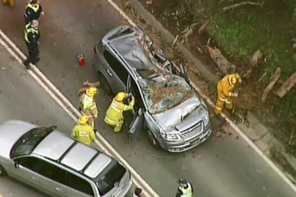 Article image for Tree falls on car in the Dandenong Ranges