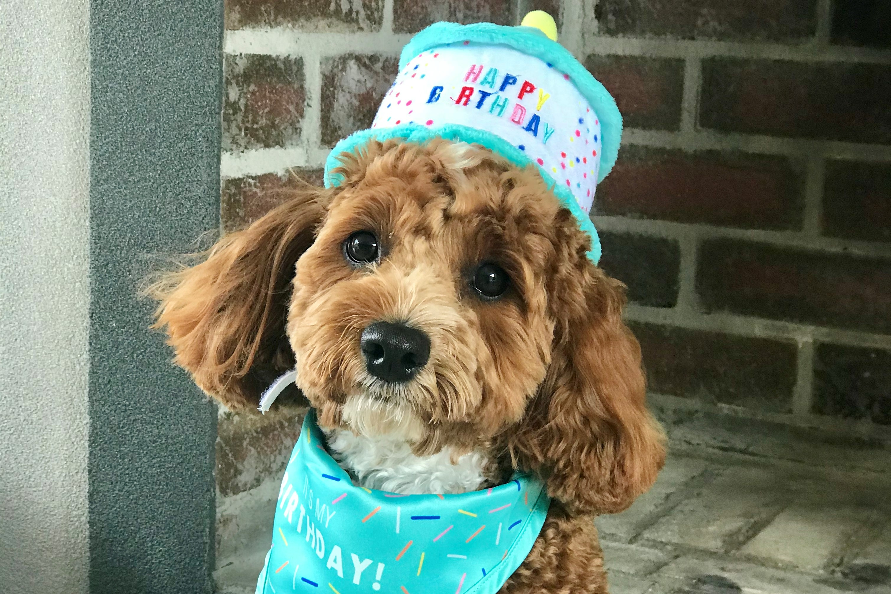 Article image for PHOTO GALLERY: Dogs celebrating their birthdays