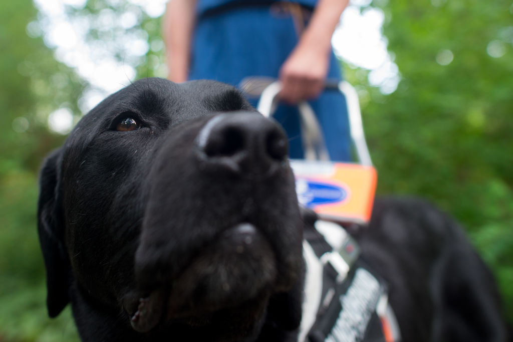 Access denied: Blind cancer patient refused guide dog in private hospital