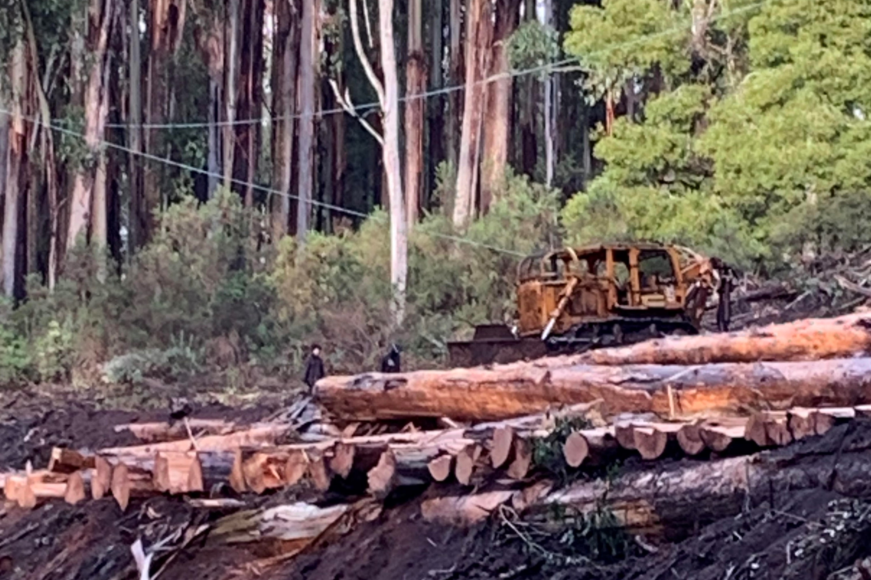 Article image for Protesting Greenies bring logging to a halt in Toolangi State Forest