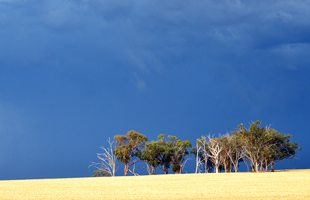 Article image for State of drought and rain: Victoria's 'different' winter