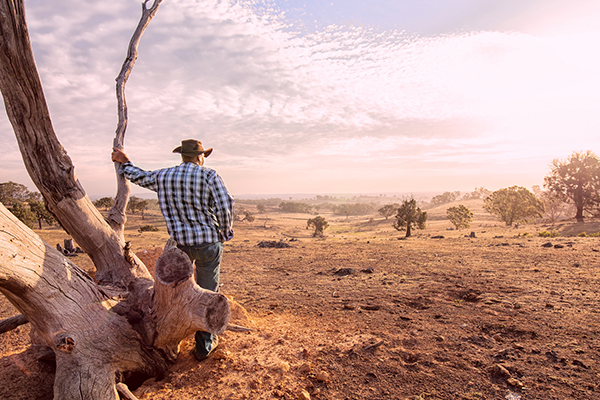 Article image for Scott Morrison asked to consider paying drought-ravaged farmers to leave the land