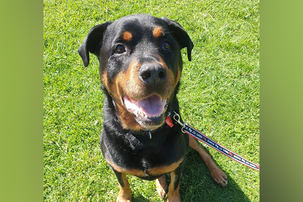 Article image for Hunt for a new home for dog dumped in park under strange circumstances