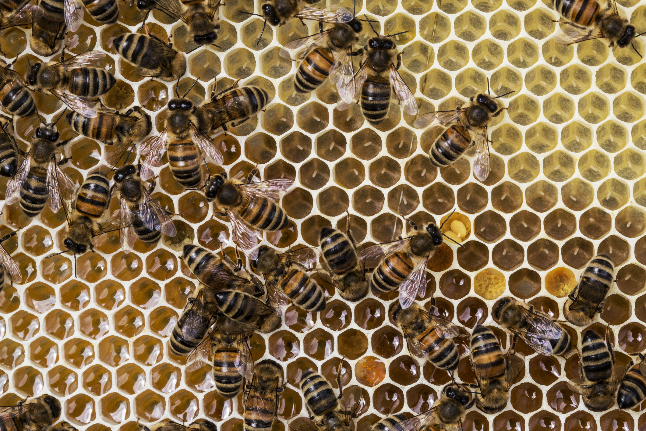 Article image for Honey shortage: Beekeepers feeling drought sting, consumers warned expect price hikes