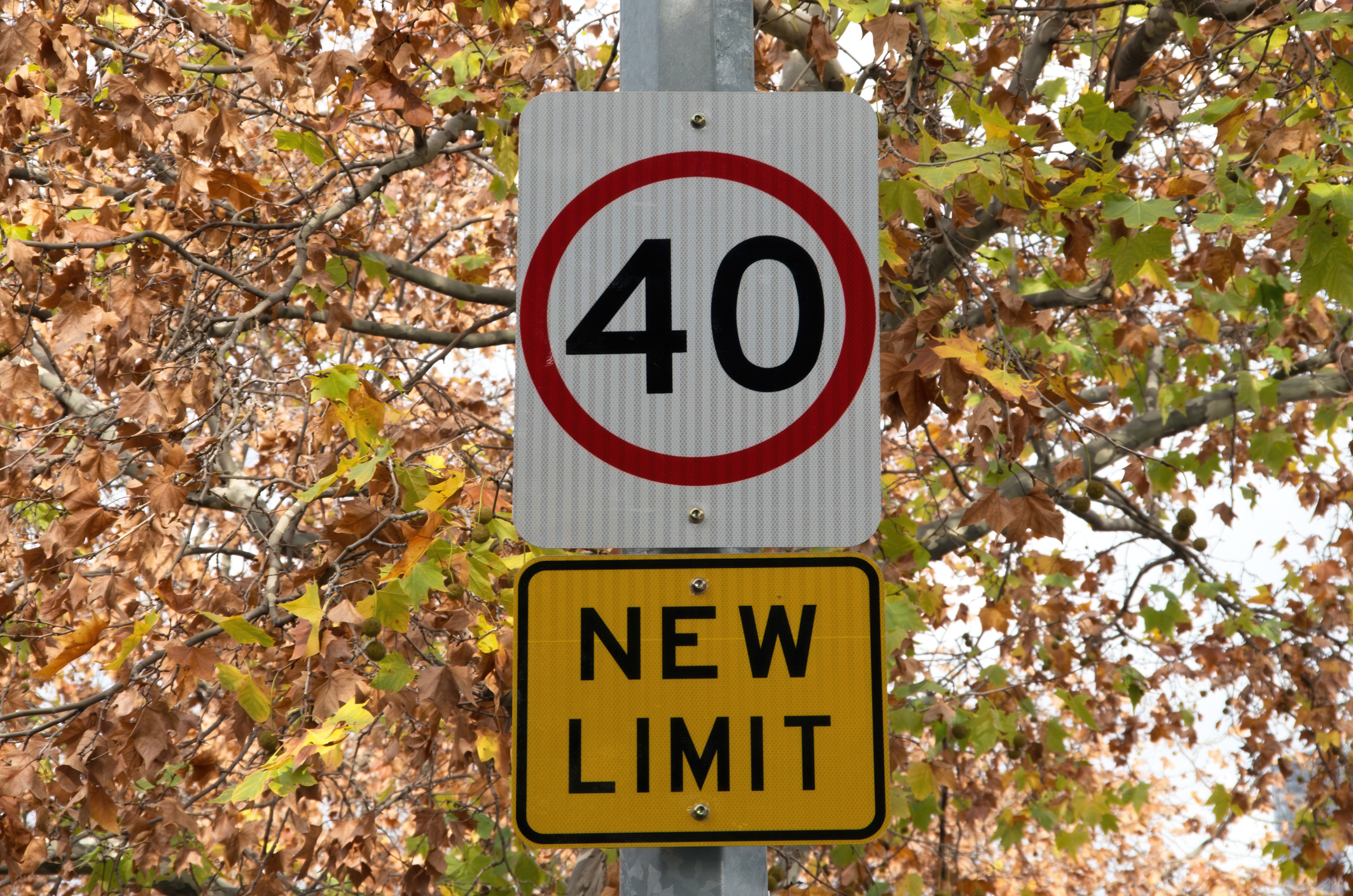 Article image for Push to make ALL suburban streets 40km/h