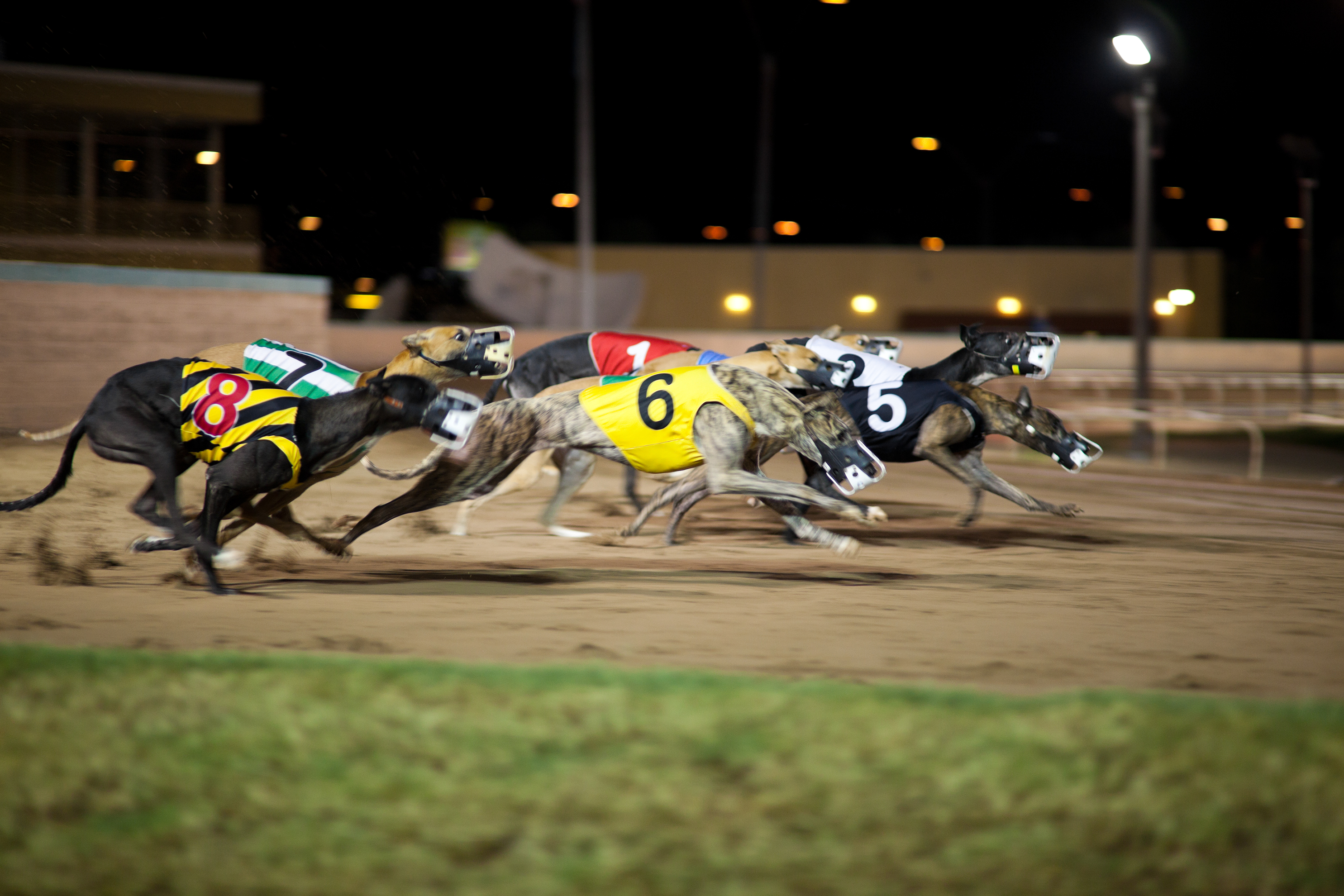 Article image for Greyhound racing boss sees silver lining in live-bait scandal