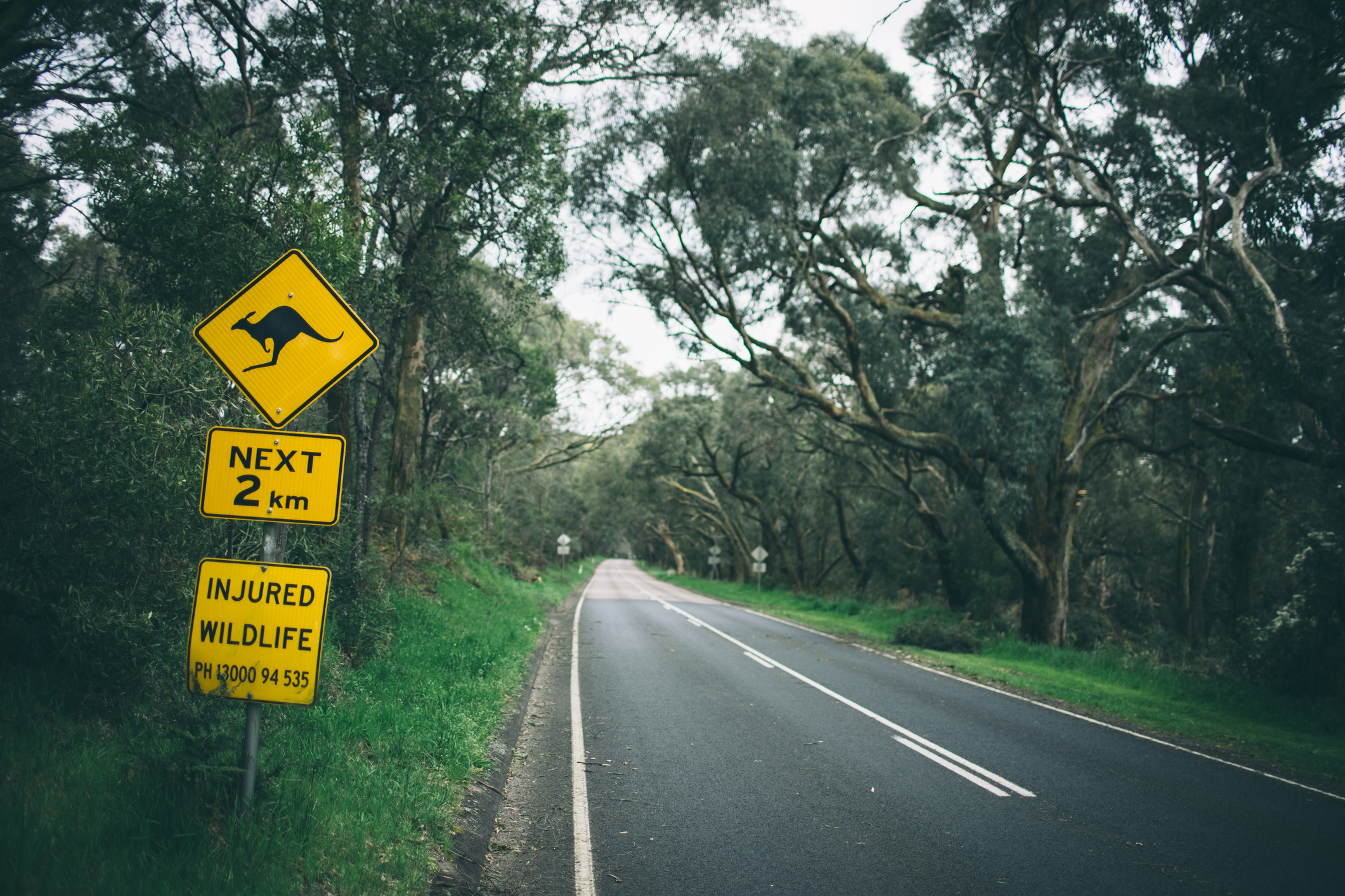 Article image for Calls for speed limits to be cut as Mornington Peninsula road toll surges