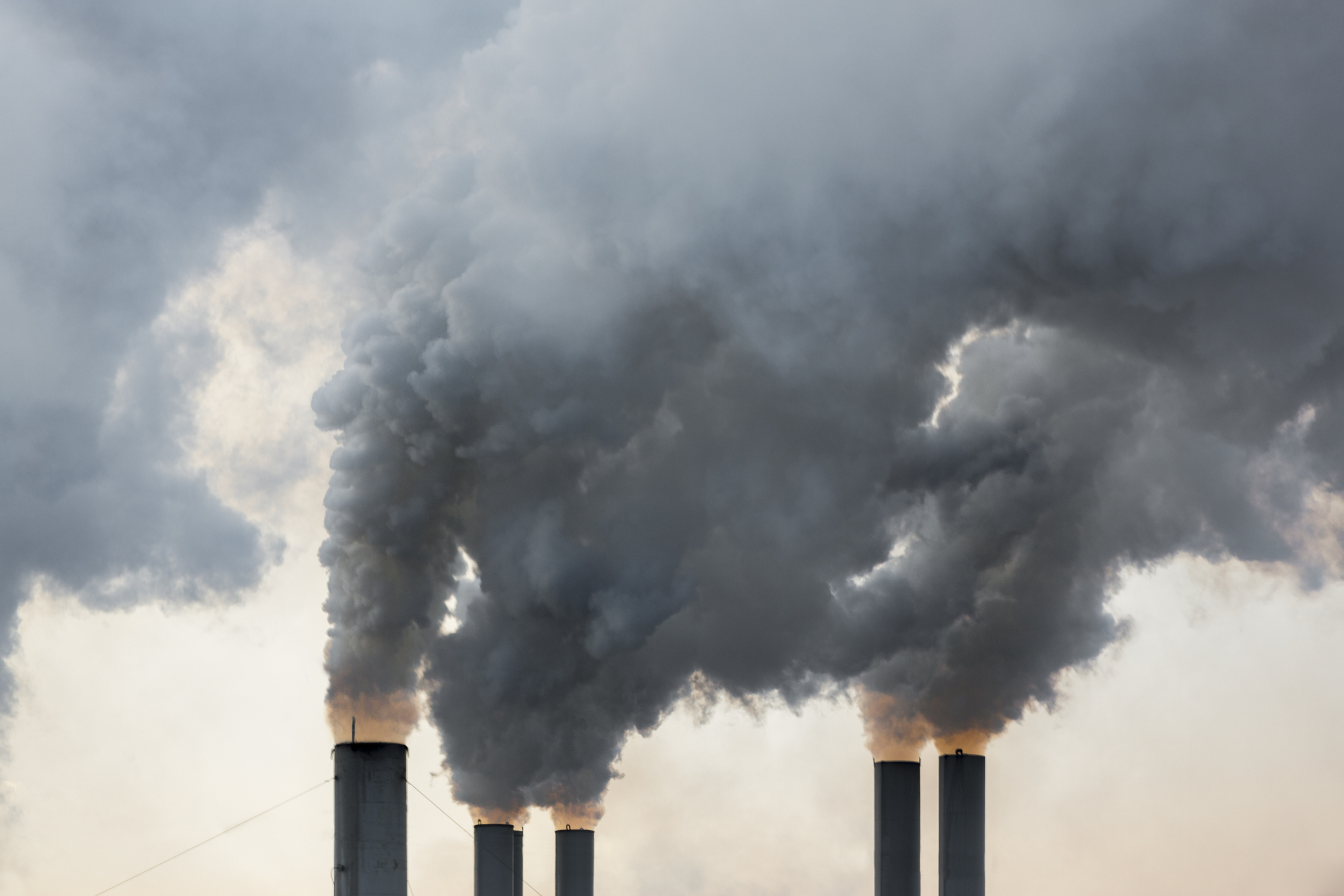 Article image for 'Untold suffering': 11,000 scientists declare climate emergency, call for 'massive changes' to energy production
