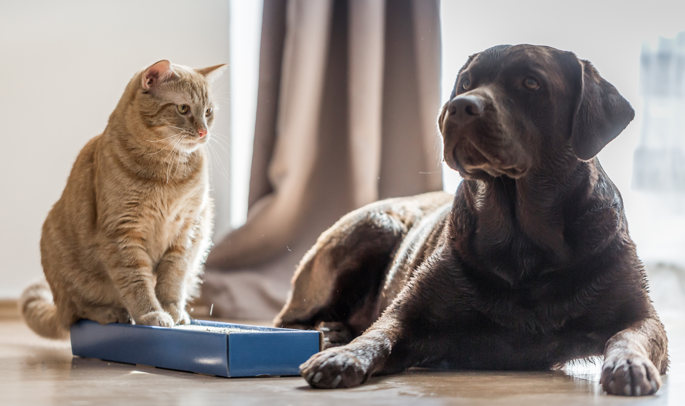 Article image for Former energy minister proposes 'carbon tax' for pets