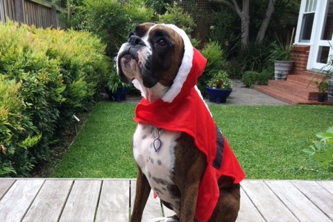 Article image for Photos: Neil and TJ dress their dogs up for Christmas