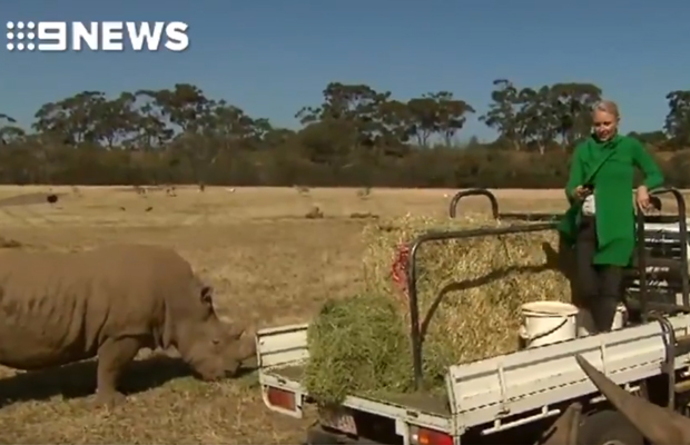 Article image for Rhino scare forces Livinia Nixon to end TV weather segment