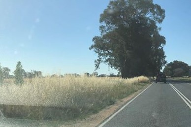 Article image for 'Incredibly dangerous': Overgrown grass on Victorian roadsides sparks fire fears