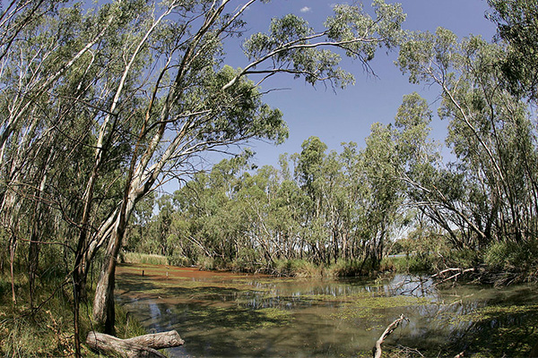 The Murray-Darling Basin Authority's end of year report card