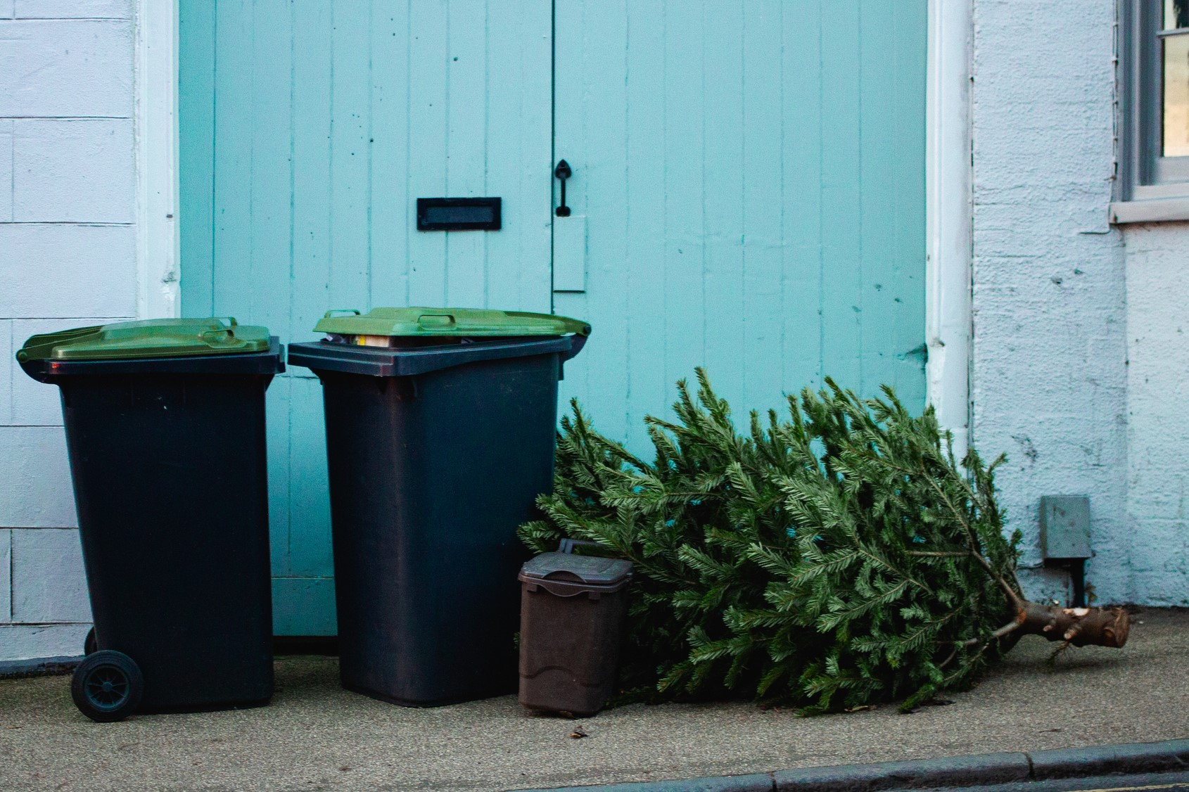 Article image for Trees for goats: A novel way to dispose of your unwanted Christmas tree