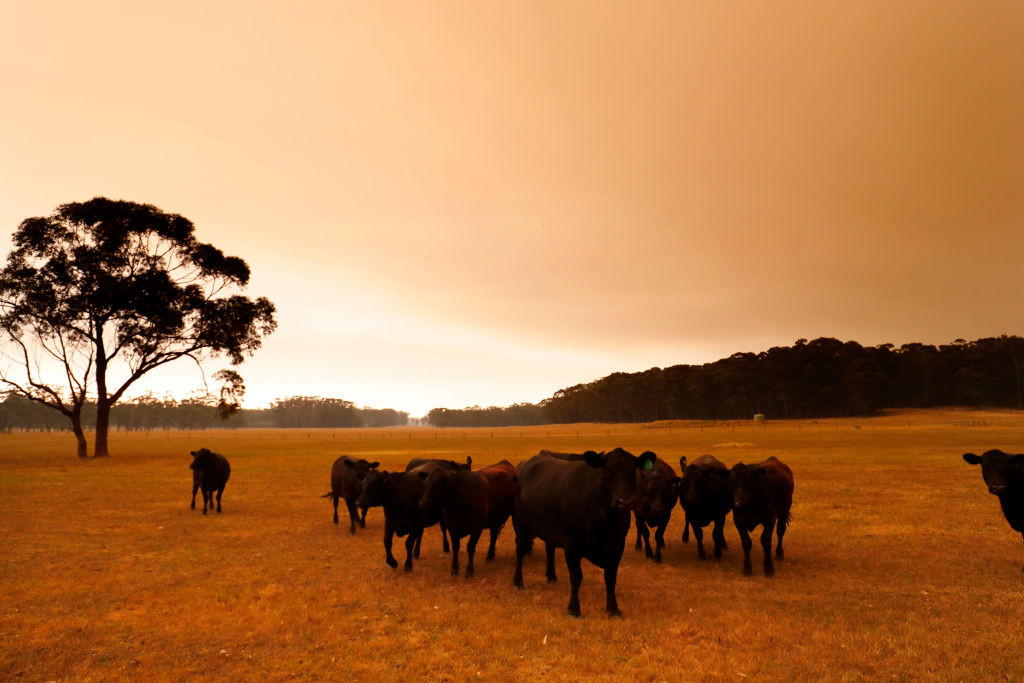 Article image for Red tape madness as cattle starve