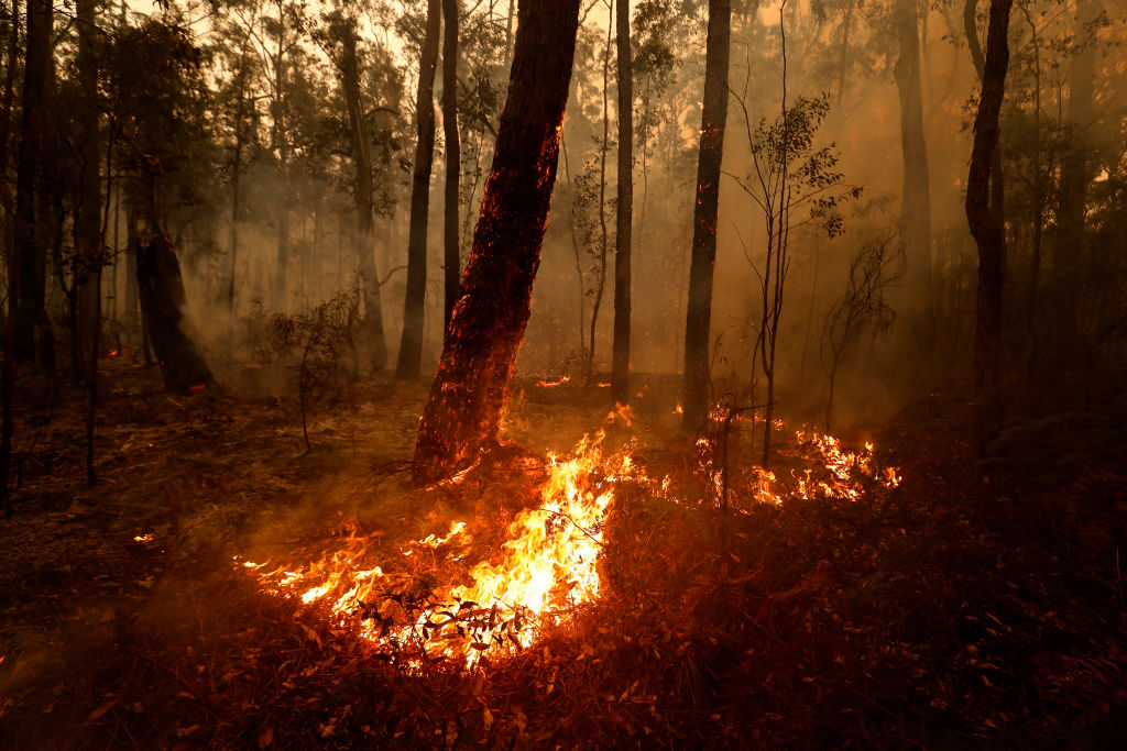 Article image for 'Get rid of the bush, or live with it': Experts say controlled burning isn't sustainable