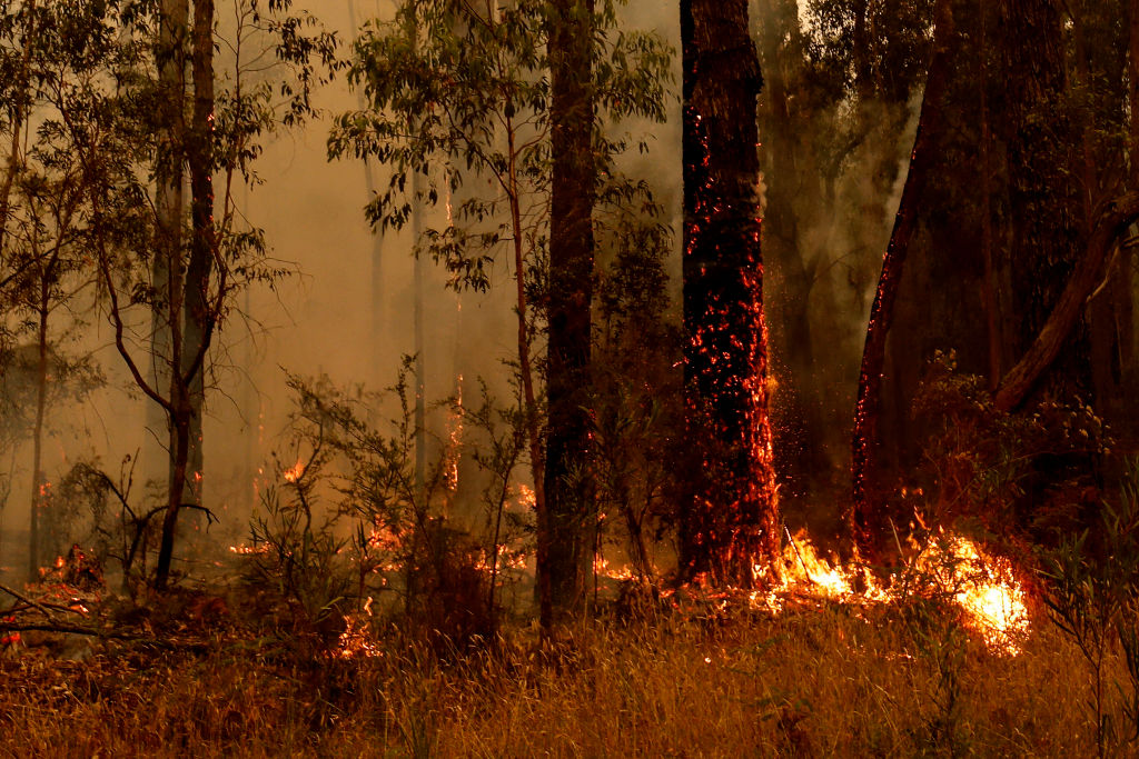 The top request coming out of bushfire-stricken Victorian communities