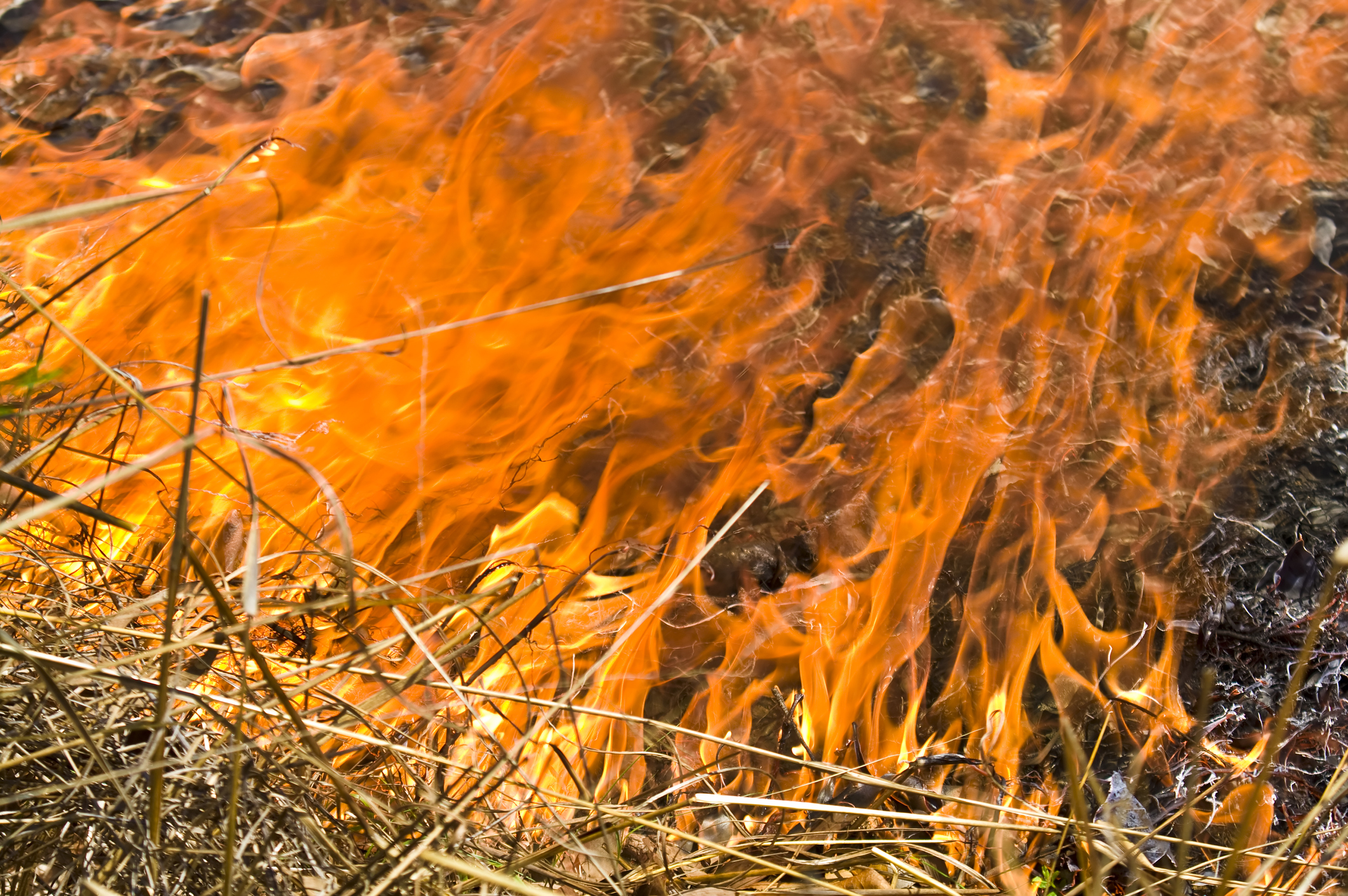 Article image for 'Political constraints' have made bushfires worse, says East Gippsland timber harvester
