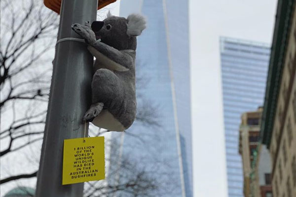 Article image for Why toy koalas have appeared all over New York City