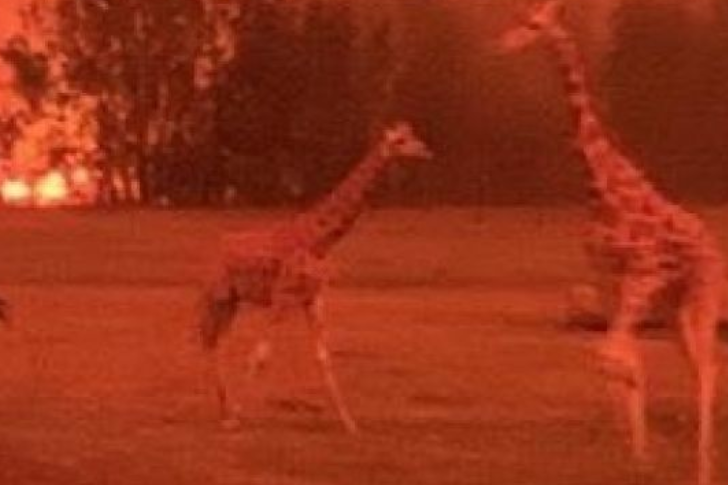 Article image for Hundreds of animals saved by staff as fire reaches zoo