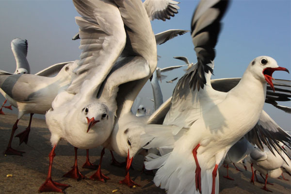 Article image for Sick of seagulls stealing your chips? Here's how you can keep them away