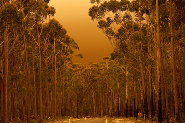 Article image for Opposition calls for public inquiry into devastating Victorian bushfires