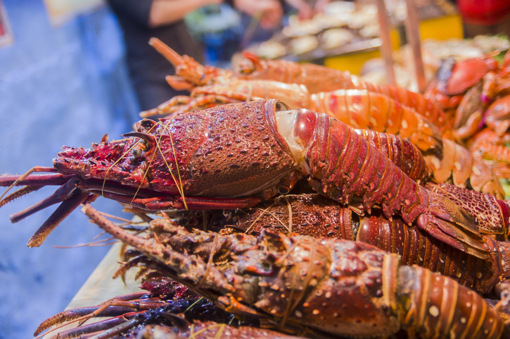 Article image for Why you should go out and buy yourself a lobster